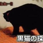 黒猫ビター、探し物は何ですか?(面白い&可愛い猫)