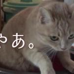 トイレでうまく砂をかけられないうちの猫さんがかわいい