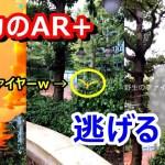 【ポケモンGO】「AR+」で奇跡と悲劇?! ハプニング続出のリワードファイヤーゲットチャンス!
