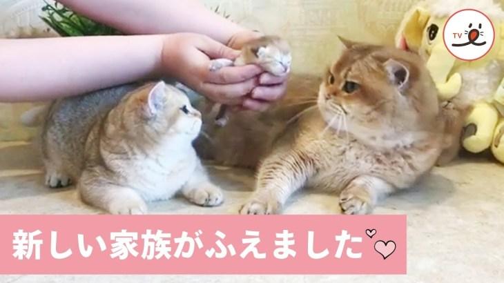 かわいい赤ちゃんが産まれたよ💕 ネコさん家族のはじめての記念撮影🐱【PECO TV】