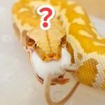 サービス精神のないヘビがかわいい