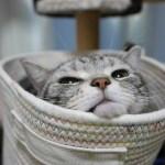 シャクレナ!しゃくれていても可愛い猫