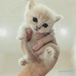 「猫かわいい」 すごくかわいい子猫 – 最も面白い猫の映画 #149