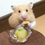 サツマイモパフェの食べ方が雑!おもしろ可愛い癒しハムスター How to eat sweet potato parfait is bad!