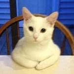 「猫かわいい」 すごくかわいい子猫 – 最も面白い猫の映画2018 #155