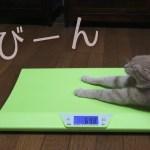 犬猫たちの体重を測ったら驚きの結果に・・・