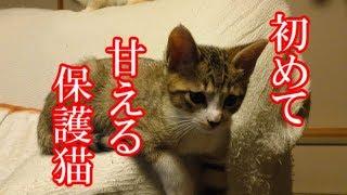 かわいい子猫が突然お家にやってきた-その時、先住猫達は・・・?!13日目-kitten came to our house 13