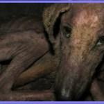 【感動】エサを探す体力すらなく廃墟の地下で丸まっていた犬。保護され、栄養と薬と愛情をたくさんもらうと…【世界が感動!涙と感動エピソード】