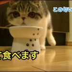 子猫に銀色のヤツ?与えてみた【猫】【かわいい】