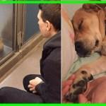 【感動】不安の中で始まった「飼い犬生活」。人間の愛情を感じ徐々に心を開くと驚きの変化が!!【世界が感動!涙と感動エピソード】