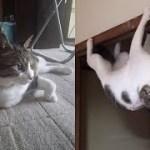 猫ちゃんの不思議で奇怪なポーズがじわじわ面白いw~A funny and bizarre pose of a cat is interesting.