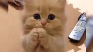 「猫かわいい」 すごくかわいい子猫 – 最も面白い猫の映画2018 #171