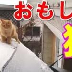 【猫ハプニング】にゃにゃにゃ!?有名爆笑ネコが大ボケしまくる! 世界のfail&funny cat【Twitterで話題】