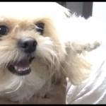 【ゆる動画】閲覧注意…可愛い犬vsカマキリの戦い