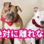 【感動実話】絶対に離れない!互いの痛みを知る2匹の保護犬は、ひと目で恋に落ちた