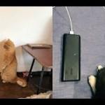 猫ちゃんのじわじわくる面白い行動に毎日、和む♡~Funny behavior of cats.