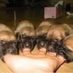 インターネット上で一番ホットなビデオ♥面白い動物♥犬、猫、動物の面白い瞬間#33