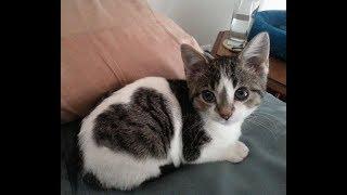 見つけたら幸せになれる!?面白い柄の猫ちゃんが可愛すぎてヤバい♡~Funny patterned cat.