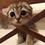 「猫かわいい」 すごくかわいい子猫 – 最も面白い猫の映画 #174
