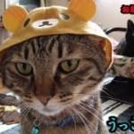 『リラックマ』可愛い猫用かぶり物