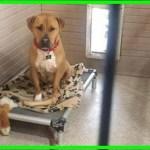 【感動】2年半もの間シェルターで家族を求め続けた犬…何度ドタキャンされてもその犬は諦めなかった!【世界が感動!涙と感動エピソード】