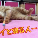 かわいい子猫と添い寝はいかが!?きんたと添い寝風動画!