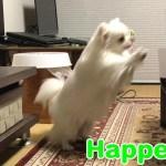 """「絶対笑う」犬のハプニング!チワワの失敗してしまう瞬間-""""Absolute laugh"""" Dog's happening! The moment when Chihuahua fails"""
