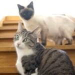 【鳴き声】猫5匹の可愛い音5種