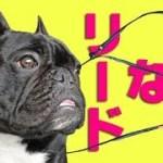 【超おすすめ】犬のリードの進化がすごい!イージードッグヴァリオ6