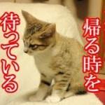 かわいい子猫が突然お家にやってきた-その時、先住猫達は・・・?!7日目-夕方kitten came to our house 9