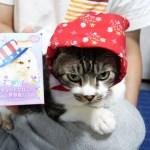 超かわいい♥リキちゃんの新しい帽子☆キュートな猫の世界旅行を買ってみたよ☆【リキちゃんねる 猫動画】Cat video キジトラ猫との暮らし