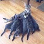 インターネット上で一番ホットなビデオ♥面白い動物♥犬、猫、動物の面白い瞬間#71