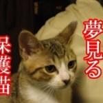 かわいい子猫が突然お家にやってきた-その時、先住猫達は・・・?!3週間目2-kitten came to our house 16