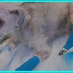 【感動】虐待され二度と歩けないと言われた犬。5年後、奇跡的な回復!驚きの姿に…【世界が感動!涙と感動エピソード】