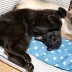 すごい寝相の黒猫