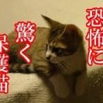 かわいい子猫が突然お家にやってきた-その時、先住猫達は・・・?!3週間目3-kitten came to our house 17