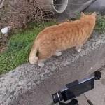「感動猫動画」いつもこうやって撮ってます