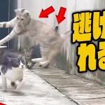 【猫のおもしろハプニング】物凄い勢いで逃げる猫ちゃんがすごい!【Video Pizza】