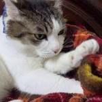 【のらの可愛い混練】Cute cat kneading