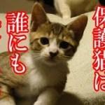 かわいい子猫が突然お家にやってきた-その時、先住猫達は・・・?!3週間目1-kitten came to our house 15