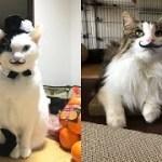 猫ちゃんにヒゲを付けると渋くなって、じわじわ面白いw~It makes me crampy when I put a beard on a cat, which is interesting.