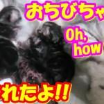 かわいい4匹のおちびちゃんww子猫生まれたよ!❤(^^♪Animation of my cute kittens