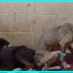 【感動】空腹で衰弱している2匹の犬を保護…愛犬家の夫婦と出会い、家族との幸せな時間を手に入れる!【世界が感動!涙と感動エピソード】