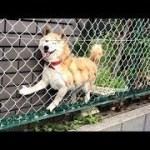 インターネット上で一番ホットなビデオ♥面白い動物♥犬、猫、動物の面白い瞬間#80