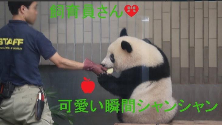 2018/07/20シャンシャン403日齢【今日の回収🍎】可愛い瞬間シャンシャンと飼育員さん