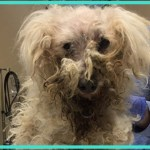 【感動】痛々しい姿をした野良犬が、優しい人々のおかげで見違えるほどの姿に変身!!【世界が感動!涙と感動エピソード】