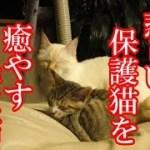 かわいい子猫が突然お家にやってきた-その時、先住猫達は・・・?!3週間目6-kitten came to our house 20