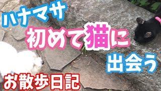 [お散歩日記] ハナマサ初めて猫に出会う〜可愛いの渋滞〜