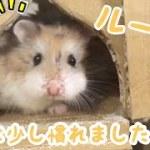 ルークのお城探検が可愛い過ぎる!短い動画(●´ω`●)