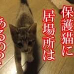かわいい子猫が突然お家にやってきた-その時、先住猫達は・・・?!4週間目1-kitten came to our house 21